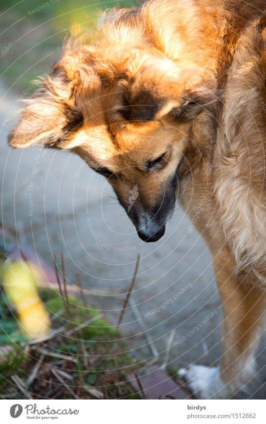 da war doch was Haustier Hund 1 Tier beobachten stehen ästhetisch Neugier positiv gelb grau loyal Tierliebe Treue achtsam Ausdauer Freundschaft Mischling blond