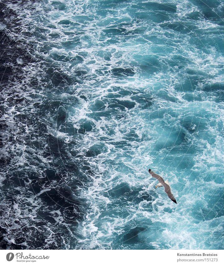 Mittelmeerschaum II Wasser weiß Meer blau Sommer Ferien & Urlaub & Reisen Tier Bewegung Wasserfahrzeug Kraft Vogel nass Europa fahren Tourismus Reisefotografie