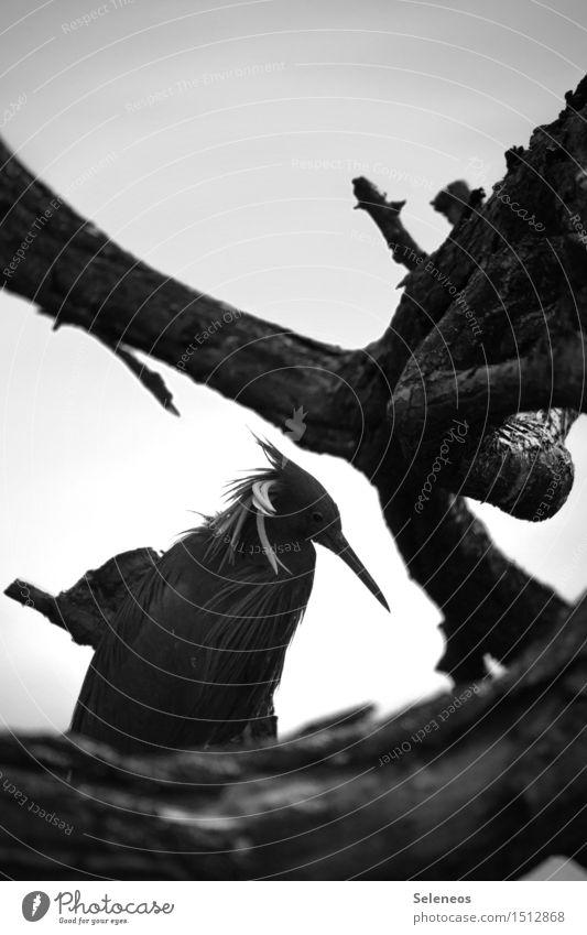 leichte Frise Natur Erholung Landschaft Tier Umwelt Küste Vogel Wildtier Ausflug Seeufer entdecken Tiergesicht Geäst