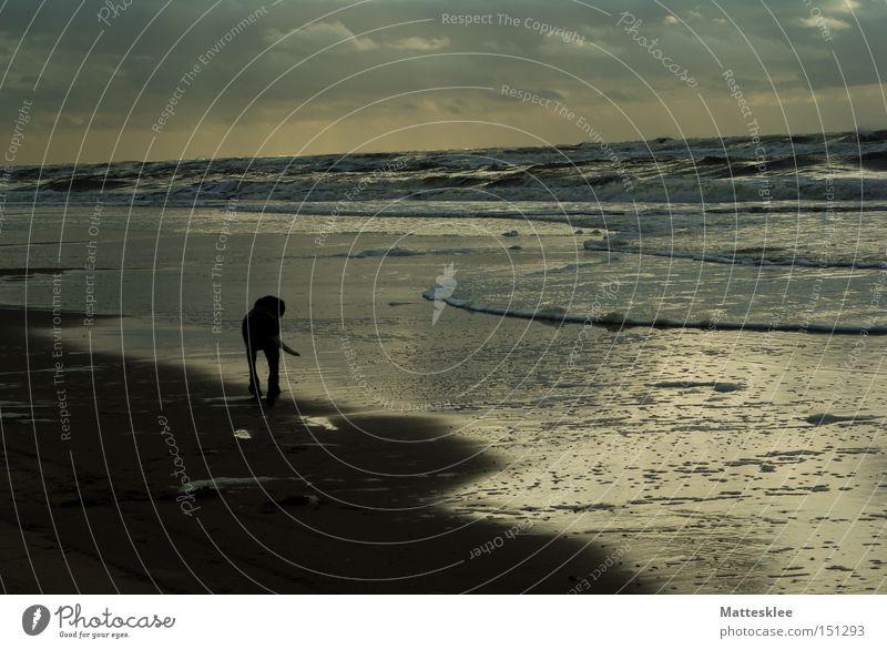 Strandleben Meer Wolken Hund Wellen Spaziergang Säugetier Brandung