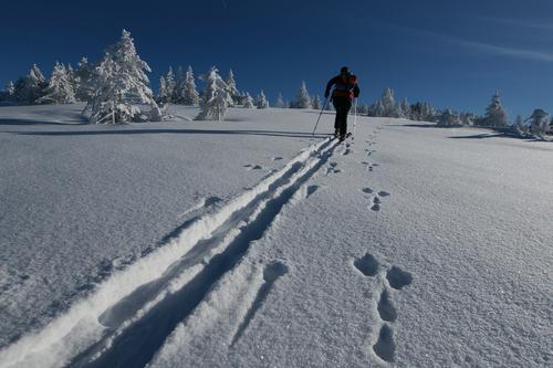 Wettlauf Hase gegen Mensch Winter Ferien & Urlaub & Reisen Berge u. Gebirge Wege & Pfade Skifahren Spuren Skier Schneelandschaft Skifahrer Wintersport Skitour