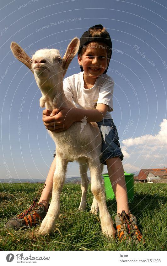 Ziegenhirte Landwirtschaft Haustier Kinnbart Hirte Milcherzeugnisse Ziegenfell