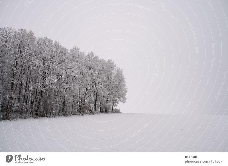 Winterruhe Natur Himmel ruhig Einsamkeit Wald kalt Schnee Erholung Tod Traurigkeit Landschaft Eis Zufriedenheit Feld Nebel