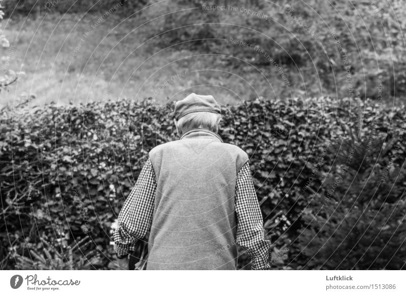 Pensionist im Ruhestand. Lifestyle Stil Gesundheit Seniorenpflege Leben Wohlgefühl Garten Mensch Mann Erwachsene Männlicher Senior Großvater 1 60 und älter
