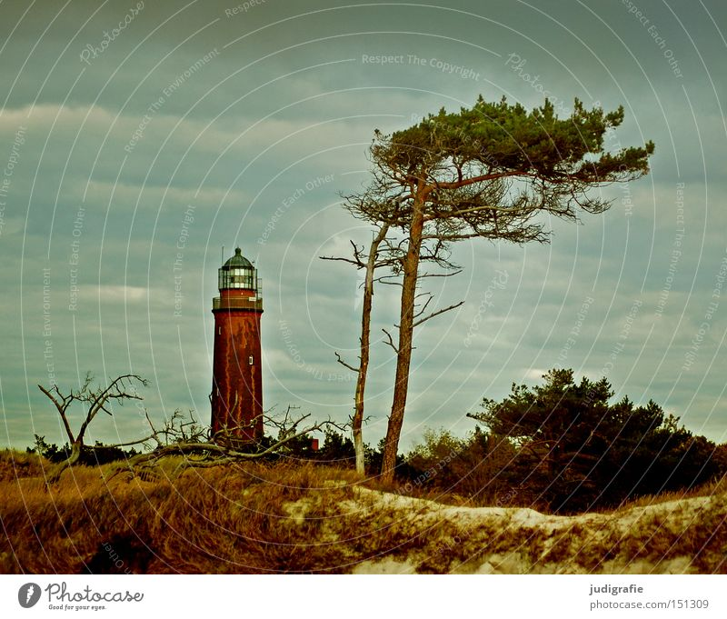 950 | Aussichten Himmel Baum Meer Strand Ferien & Urlaub & Reisen Farbe Erholung Landschaft Küste Stranddüne Leuchtturm Ostsee Darß Deutschland Weststrand