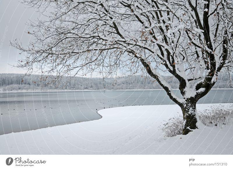 winterschlaf See Wasser Seeufer Wald Baum Winter Schnee Eis kalt Frost dunkel Schatten ruhig Einsamkeit Natur Ast