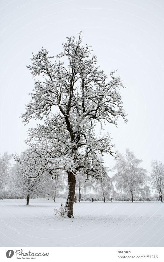 Winterbaum Natur weiß Einsamkeit ruhig Landschaft Winter kalt Schnee grau Eis Wetter Frost malerisch Schneelandschaft Winterstimmung Waldrand