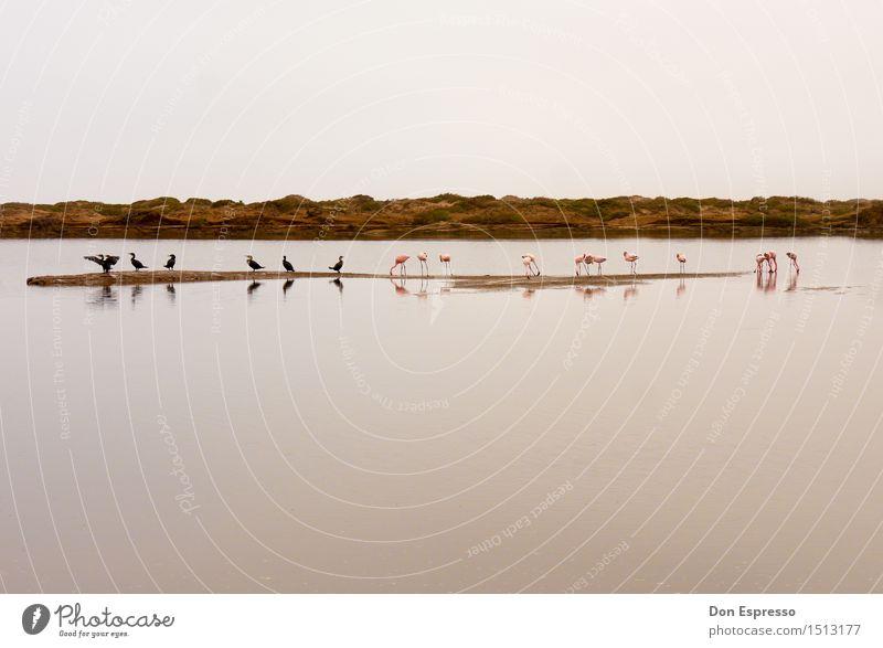 Kormorane und Flamingos Natur Landschaft Pflanze Tier See Wildtier Vogel Tiergruppe fliegen Fressen exotisch Wärme Glück Zufriedenheit Hintergrundbild Lagune