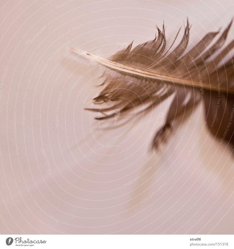 feder fliegen Luftverkehr Feder Dekoration & Verzierung zart leicht sanft durcheinander Härchen