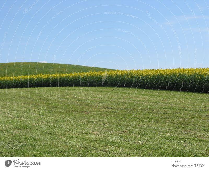 weites Feld Hügel Wiese Blume grün Sonne Horizont Landschaft Himmel Rasen blau Berge u. Gebirge