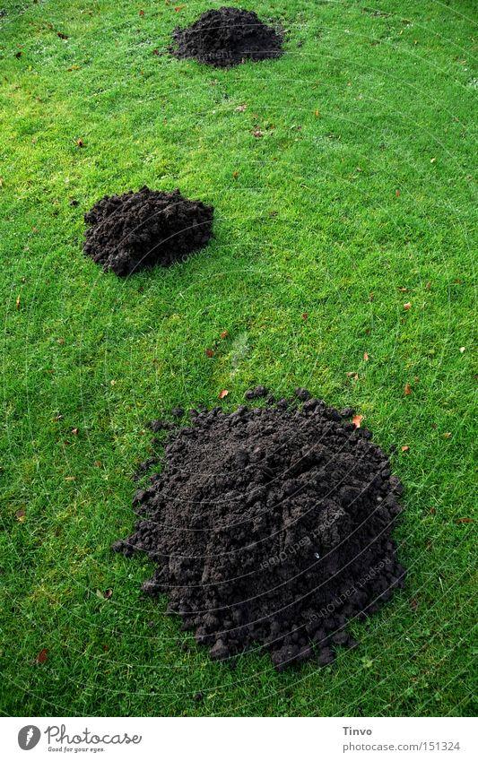 Scherhaufen grün Wiese Sand 3 Erde Rasen Haufen Schriftzeichen Maulwurf