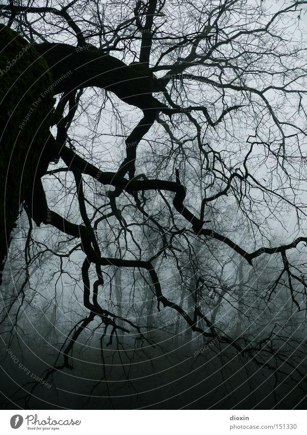 kein Lichtlein brennt... alt Baum Wald dunkel kalt Park Angst Nebel nass Frost bedrohlich Ast gruselig Panik unheimlich Entsetzen