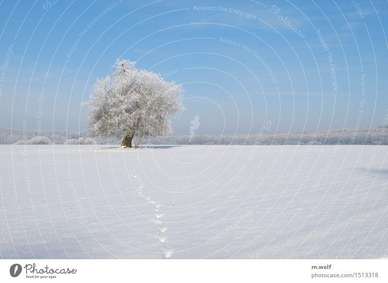 Stieleiche Natur alt Pflanze blau weiß Baum Landschaft ruhig Winter Wald kalt Umwelt Schnee außergewöhnlich Horizont Wetter
