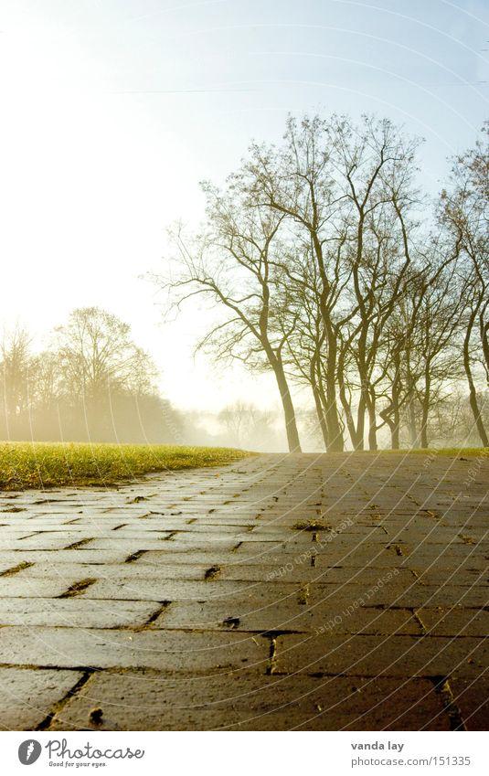 Park II Landschaft Baum Wiese Rasen Garten Wege & Pfade Herbst Winter Einsamkeit Natur Nebel Backstein Langeweile