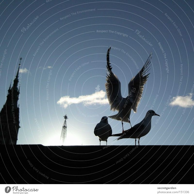 der star. Himmel blau Sonne Winter schwarz kalt Mauer Vogel unten Möwe Verkehrswege flattern