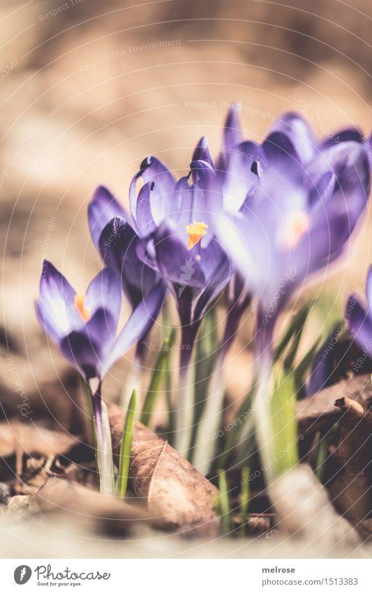 Sonnenanbeterinnen Natur Stadt Pflanze grün schön Blume Blüte Frühling Garten braun Design leuchten elegant Erde mehrere genießen