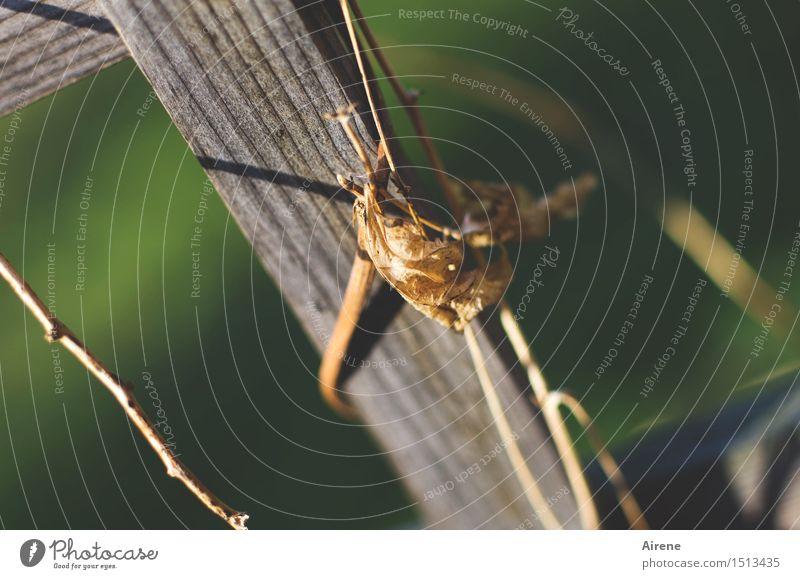 mit letzter Kraft grün Blatt Holz grau braun trist festhalten trocken dünn Herbstlaub dehydrieren verdorrt