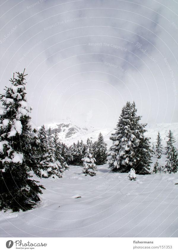 Winterwald weiß Wald kalt Schnee Berge u. Gebirge grau Nebel Baum Tanne Hochebene