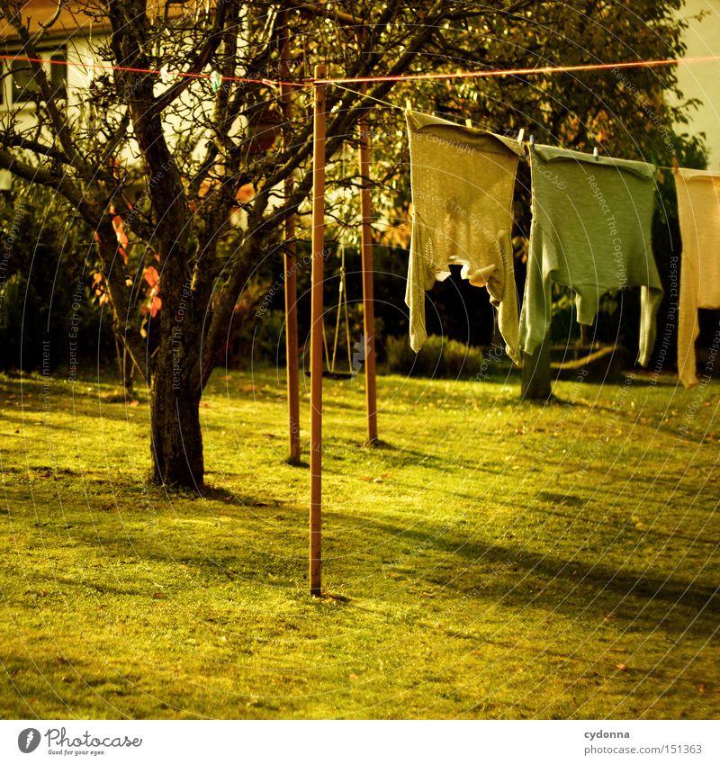 Wäschewaschtag Natur grün Arbeit & Erwerbstätigkeit Wiese Herbst Garten Park Luft Bekleidung Sauberkeit Reinigen Pullover Wäsche waschen Wäsche Haushalt trocknen