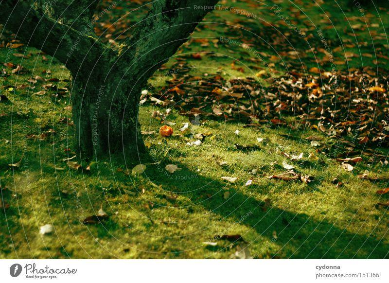 In meinem Garten Natur schön Blatt Herbst Wiese Garten Park glänzend Frucht ästhetisch Rasen Vergänglichkeit Jahreszeiten Ernte Baumstamm Apfelbaum