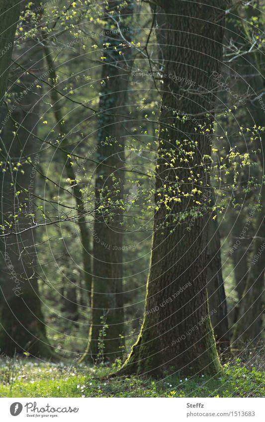 Frühlingswald aus dem Winterschlaf erwacht Frühlingserwachen Naturerwachen Waldbaden Frühlingsgefühl Frühlingszweige wohltuend erholsam erholsame Stimmung
