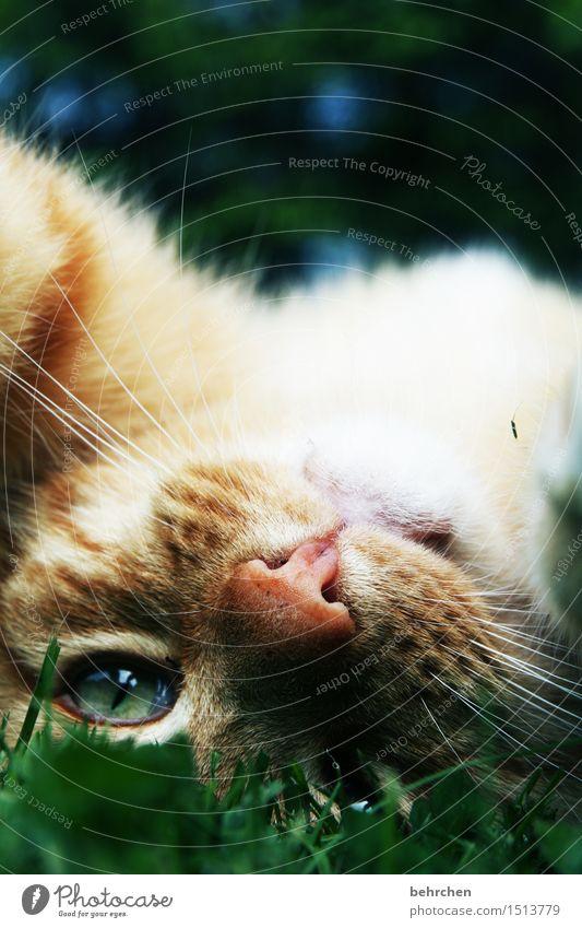 kraul mich, jetzt! Katze Natur schön Sommer Erholung Tier Wiese Auge Spielen Garten Park genießen beobachten Schönes Wetter weich Nase