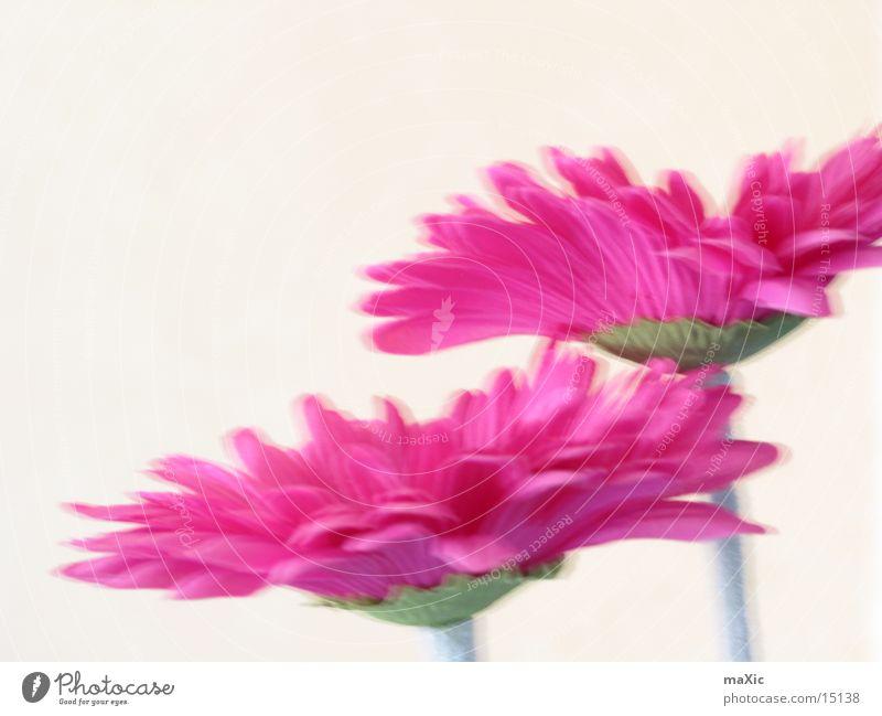 FlowerPower Natur Blume Pflanze Blüte Kraft