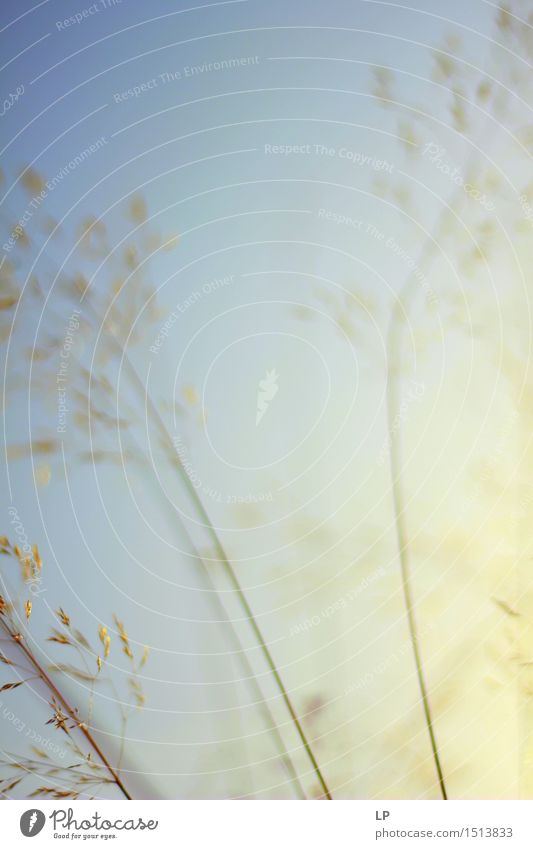 Schattierungen Natur Pflanze Sommer gelb Wärme Gefühle Herbst Frühling Wiese natürlich feminin Garten Park Zufriedenheit Nebel frisch