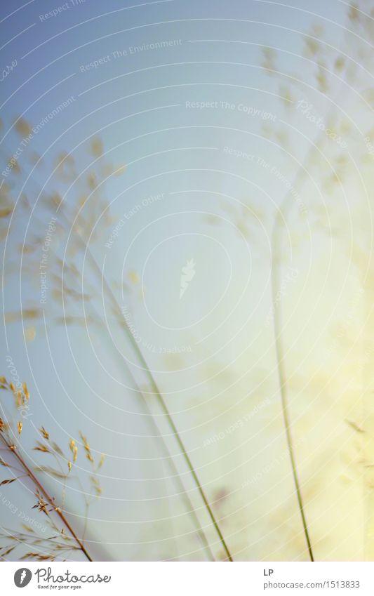 Schattierungen Natur Pflanze Urelemente Frühling Sommer Herbst Nebel Garten Park Wiese einfach Flüssigkeit Fröhlichkeit frisch natürlich positiv Wärme feminin