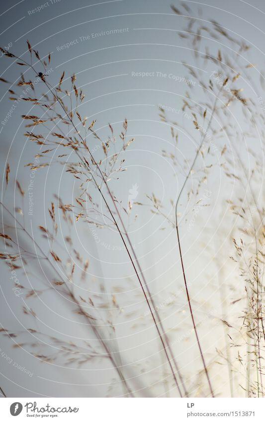 blass Umwelt Natur Urelemente Frühling Herbst Schönes Wetter Pflanze Wildpflanze Garten Park Wiese Fröhlichkeit frisch Sauberkeit schön Wärme feminin wild weich