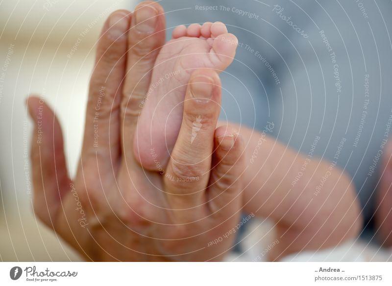 Babyfüsschen 3 Hand Freude Wärme Familie & Verwandtschaft Glück Fuß Zufriedenheit Fröhlichkeit Baby Finger Lebensfreude berühren Schutz Sicherheit Mutter Vertrauen