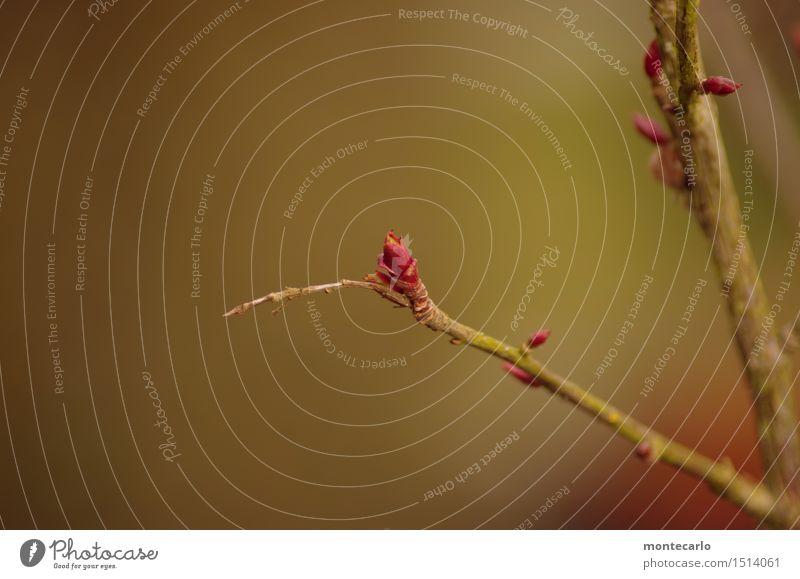 spring... Umwelt Natur Frühling Schönes Wetter Pflanze Baum Sträucher Blüte Grünpflanze Wildpflanze Blattknospe Blütenknospen wählen beobachten ästhetisch dünn