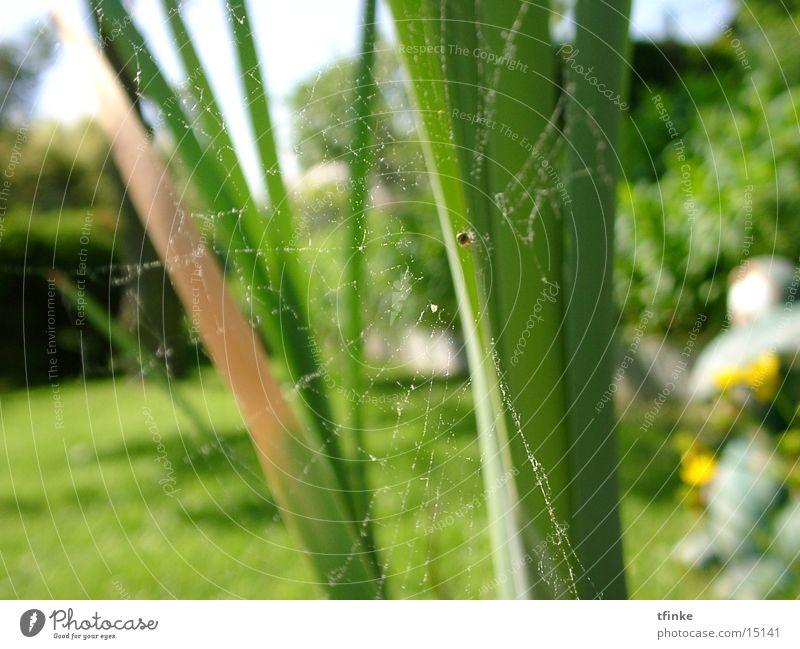 arachnofaunikum Spinnennetz Makroaufnahme Netz
