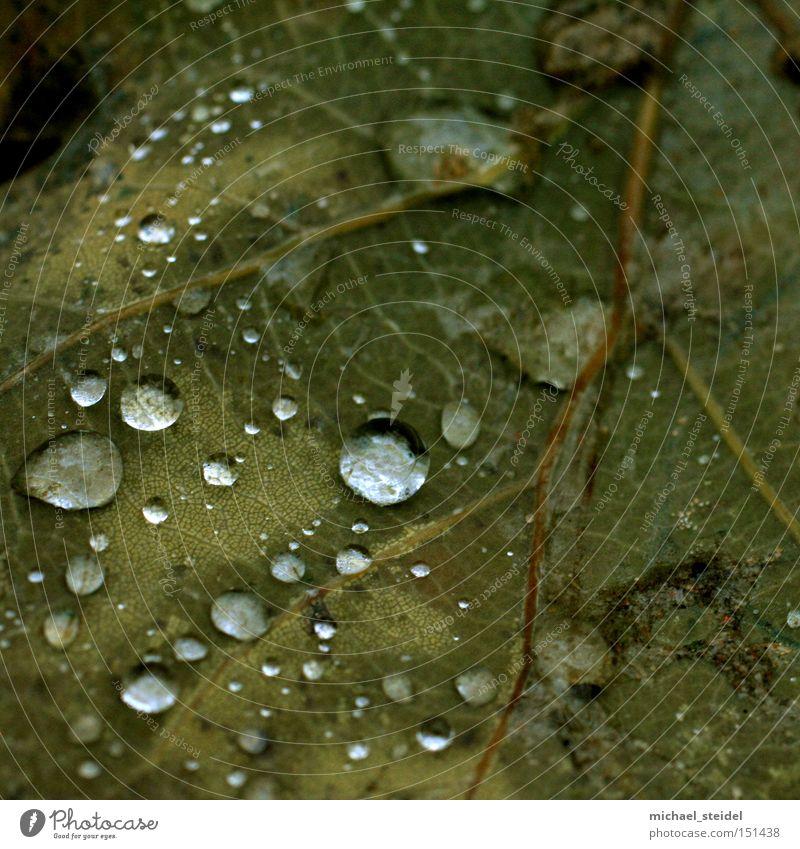 Natürliche Ästhetik im Detail Blatt grün Wassertropfen Regen Tau nass braun