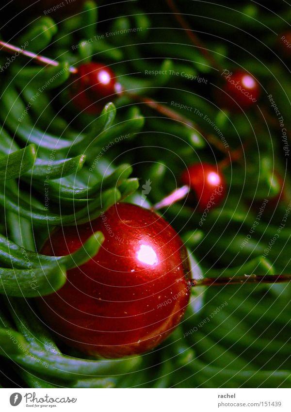 Farben der Saison Dekoration & Verzierung Tannenzweig Tannengrün Kugel glänzend Kitsch rund rot Vorfreude Warmherzigkeit gemütlich heimelig Perle Perlmutt