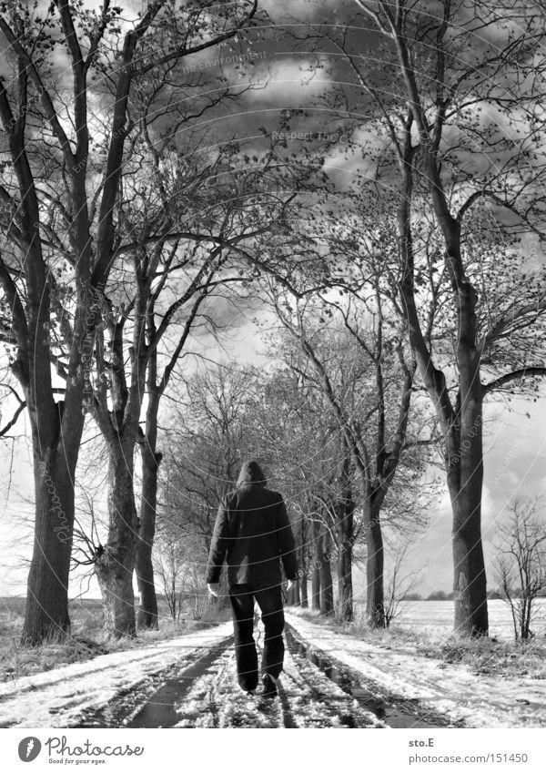 kalt pt.2 Mensch Himmel Baum Winter Wolken Straße Schnee Wege & Pfade Stimmung wandern trist Allee Geäst