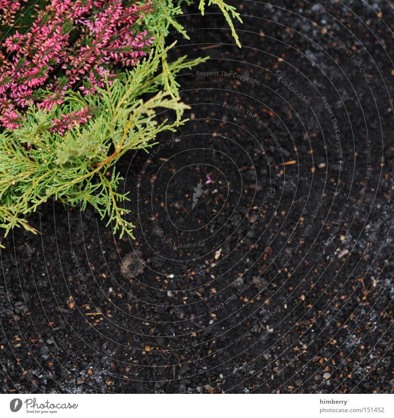 ecke mit was drin Natur Pflanze Park Landschaft Erde Erde Gartenbau Beet Grab Beerdigung Landschaftsformen Grabstein