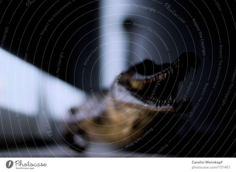 Bissig. Krokodil Fensterbrett Haustier Monster beängstigend gefährlich Licht Schatten obskur Aligator bedrohlich