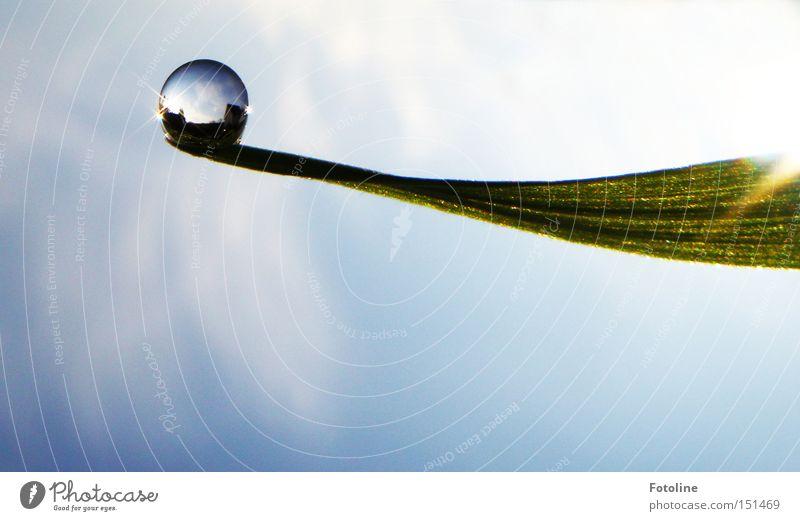 Kleines Universum II Herbst Gras Halm Himmel Sonne blau weiß frisch Frühling Sommer Wassertropfen grüß Klarheit Regen Seil