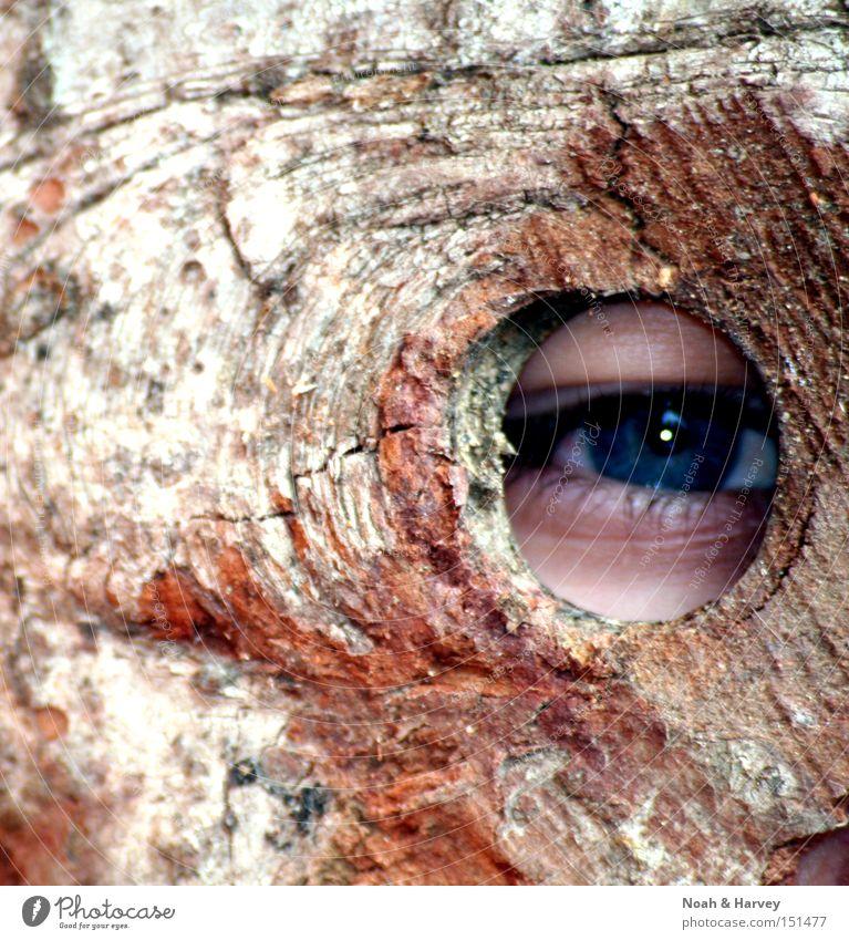 Ent Baum Sommer Fassade Schutz geheimnisvoll Maske Kino Fantasygeschichte Versteck Naturliebe