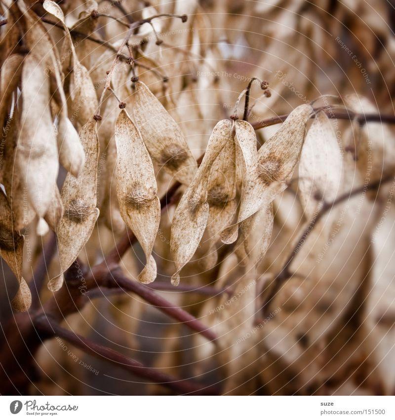 Herbstnasen Natur alt Umwelt Traurigkeit Tod braun Stimmung trist Ast Vergänglichkeit Kräuter & Gewürze Trauer trocken Verfall Sorge