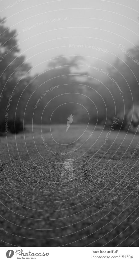 road to nowhere° Straße Angst Nebel Sehnsucht Verkehrswege Fernweh unheimlich spukhaft Korsika