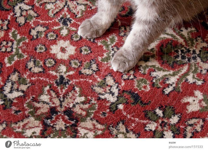 Oma´s Liebling Katze alt Tier grau warten sitzen Stoff Fell Kitsch Haustier Pfote Säugetier kuschlig Teppich Hauskatze Ornament