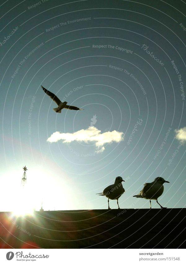 die drei muskeltiere. Möwe Schönes Wetter Mauer Silhouette Sonne flattern kalt Winter unten blau schwarz Gegenlicht Vogel Religion & Glaube