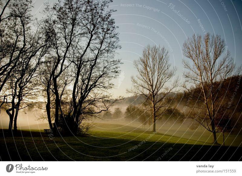 Park III Natur Baum Winter Einsamkeit Landschaft Wiese Herbst Stimmung Nebel Rasen