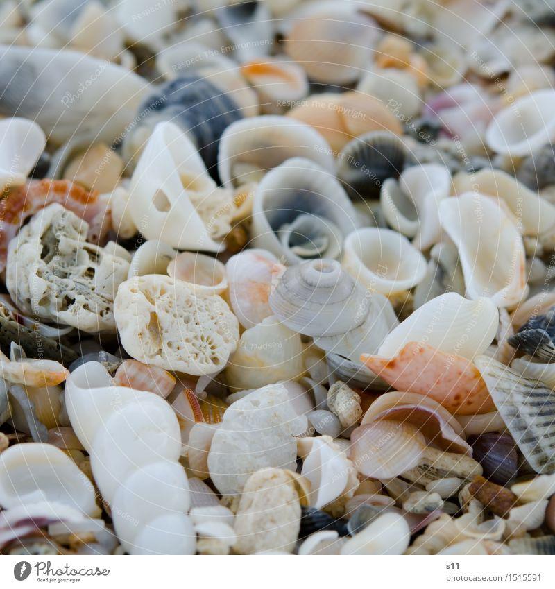 viele bunte Muscheln Natur Ferien & Urlaub & Reisen schön Sommer Sonne Einsamkeit Strand Wärme leer Suche Sammlung Spirale Haufen Schneckenhaus