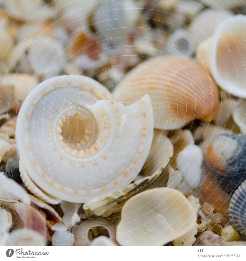 Haus zu verkaufen Umwelt Natur Sand Sonne Sommer Küste Totes Tier Muschel schön leer gehen Schneckenhaus Muschelschale Sandstrand Ferien & Urlaub & Reisen