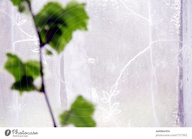 Unscharfe Pflanze Fenster Glas Fensterscheibe Scheibe Glasscheibe Gardine Stoff Muster Zimmerpflanze Ranke Aussicht Nebel Dunst Häusliches Leben stores