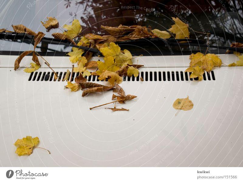 laubhaube Blatt Herbst PKW KFZ Fensterscheibe Scheibe Autofenster Oktober Motorhaube