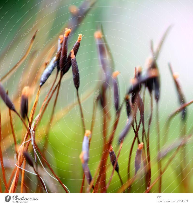 MoosWald schön Pflanze Lampe Bodenbelag zart feucht Samen Irritation Sporen